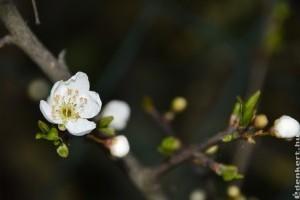 Május 15-ig van mód a tavaszi fagykár bejelentésére