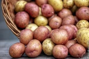 Jó áron az ízletes paradicsom és az újkrumpli