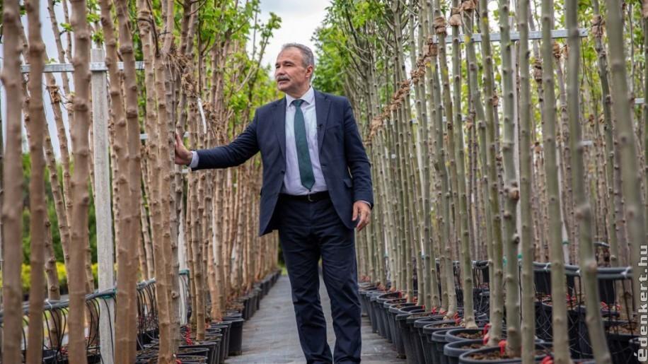 12 ezer fát igényelhetnek a 10 ezer főnél kisebb települések