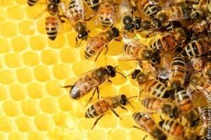 Tudjon meg mindent a méhekről!