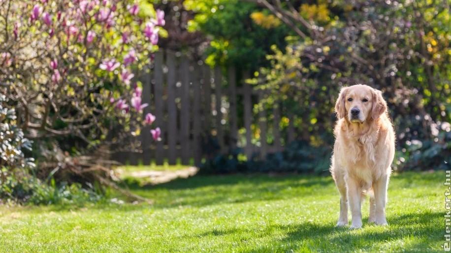 Kutya mellett hogyan lehet szép kertünk?