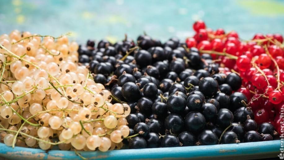 Bevált málna-ribiszke receptek: zselé, hab, bor