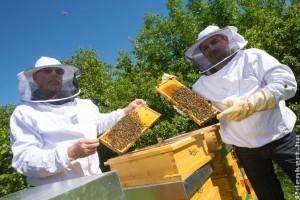A méhek európai fővárosa: Bécs