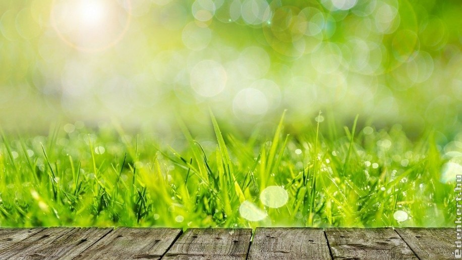 Folyékony humusz a kerti talajok, gyepbetegségek gyógyítója