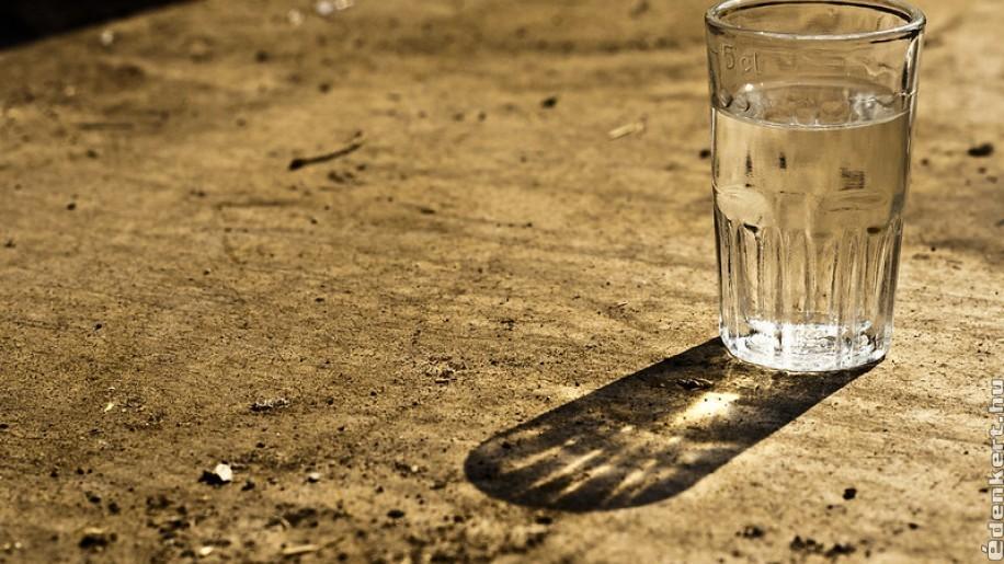 Különleges pálinka-alapanyagokat kutattak a Szent István Egyetem végzősei