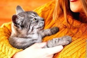 Macskatartás okosan