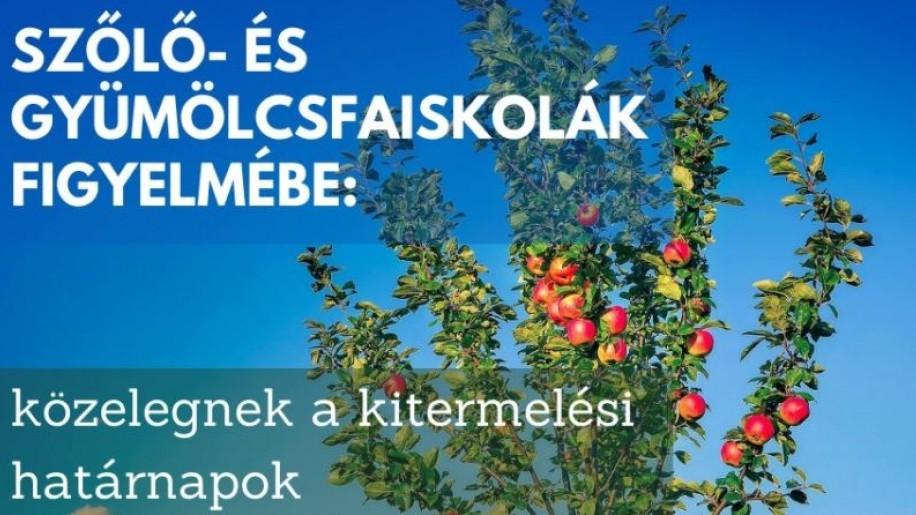Októberben kerülnek piacra a szabadgyökerű szőlő- és gyümölcsfaoltványok