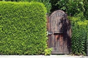 Hogyan lesz igazán szép a sövényed? Sövények telepítése és ápolása