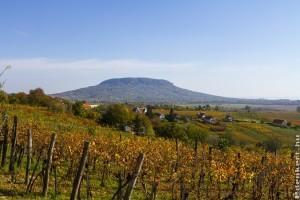 Őszi nagytakarítás a Balaton körül: hová kerüljön a zöldhulladék?