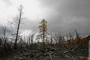 Kihalás fenyegeti a növények kétötödét