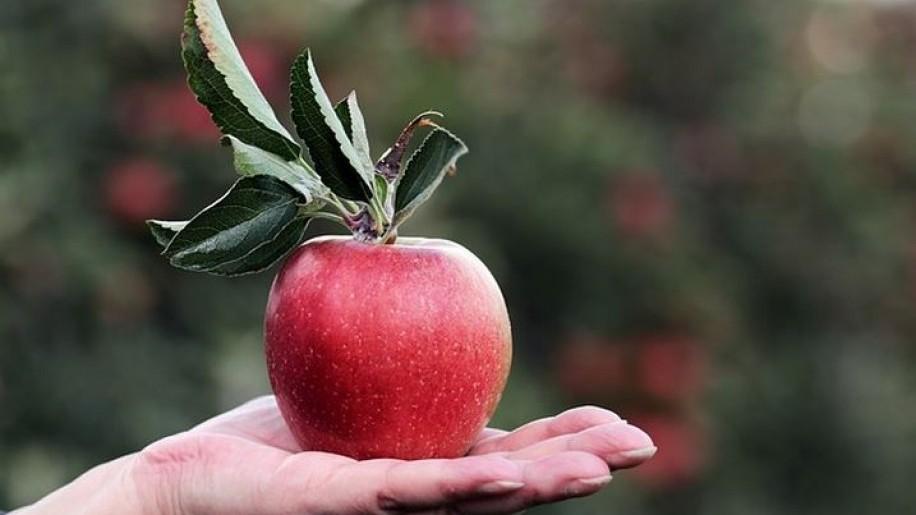 Mennyi az alma ára 2020-ban a piacon?