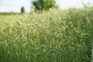 Ruhára tapadt magokkal is terjednek az inváziós növényfajok
