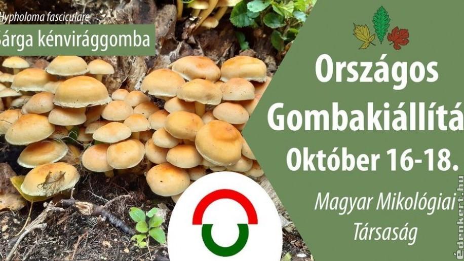Gombakiállítás megszállott gombásoknak a Soroksári Botanikus Kertben
