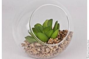Pozsgás növények az otthonunkban!