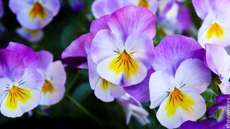 Árvácska: színek a téli kertben