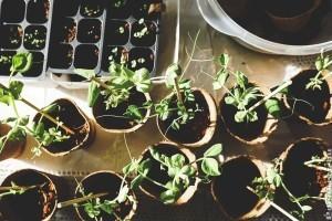 Járvány idején: biztosítsuk a vitaminigényt saját kiskertünkből