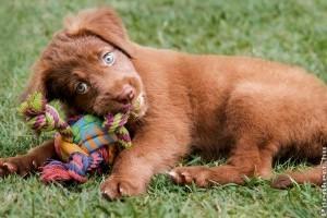 Hogyan gondozd a kutyádat?