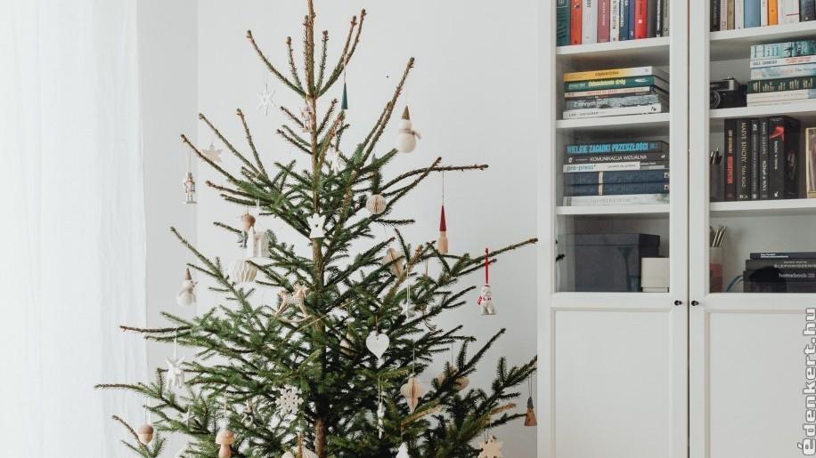 Válasszunk cserepes vagy földlabdás fenyőt karácsonyra - az ünnepek után a kertünk dísze lesz!