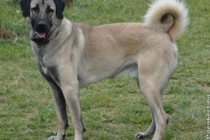 Meg akart szabadulni kutyájától egy bécsi nő, 8700 eurót kell fizetnie