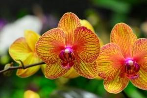 A világ 3 legkülönlegesebb orhideája