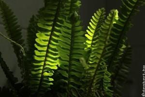 5 szobanövény, ami elviseli a sötétséget