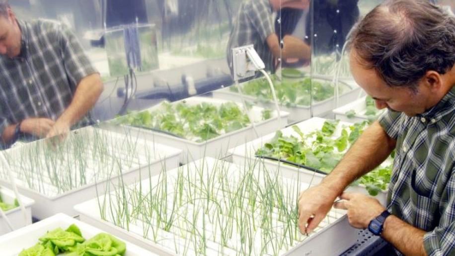 Környezetbarát növénytermesztési eljárás automatizálásán dolgoznak magyar kutatók