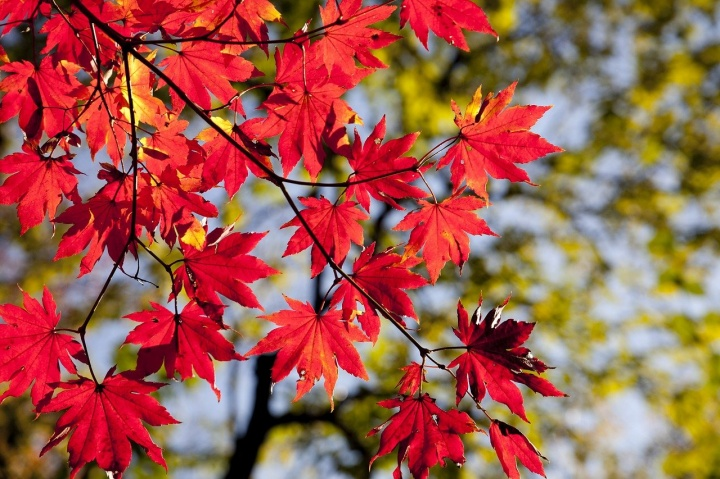 autumn-leaves-2789234_1280