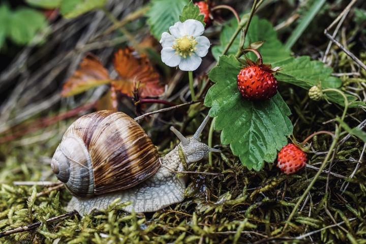 snail-5274681_1920
