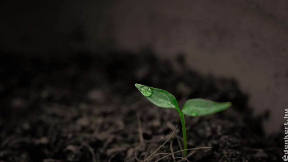 Talajélet forrása a víz és a tápanyag bármilyen kert esetében