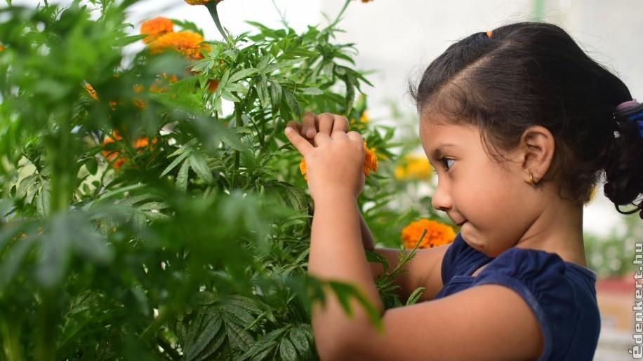 Tervezz tavaszra gyerekbarát kertet!