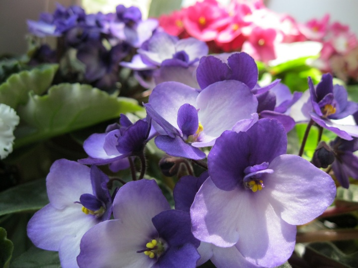 flowers-4709239_1920