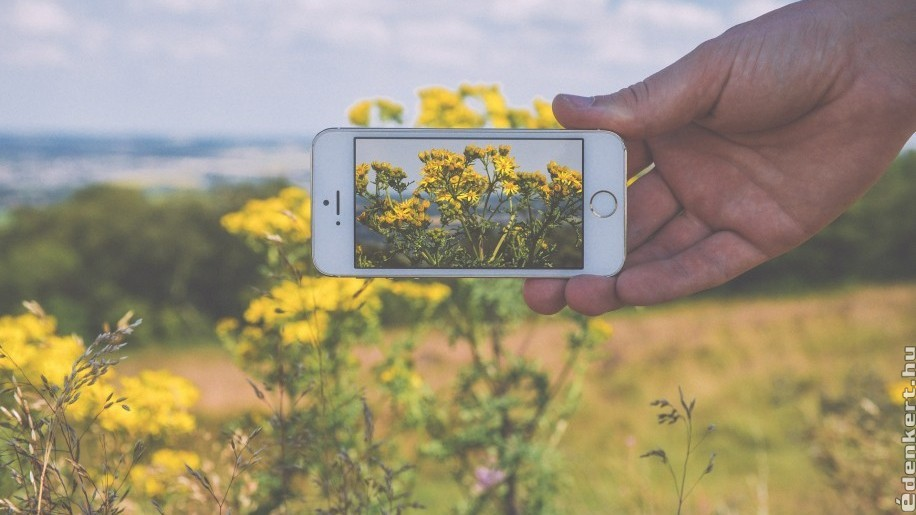 Zsebkönyv helyett - ezek a legjobb növényhatározó appok