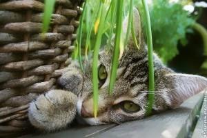 Ezek a szobanövények veszélyesek a cicákra!