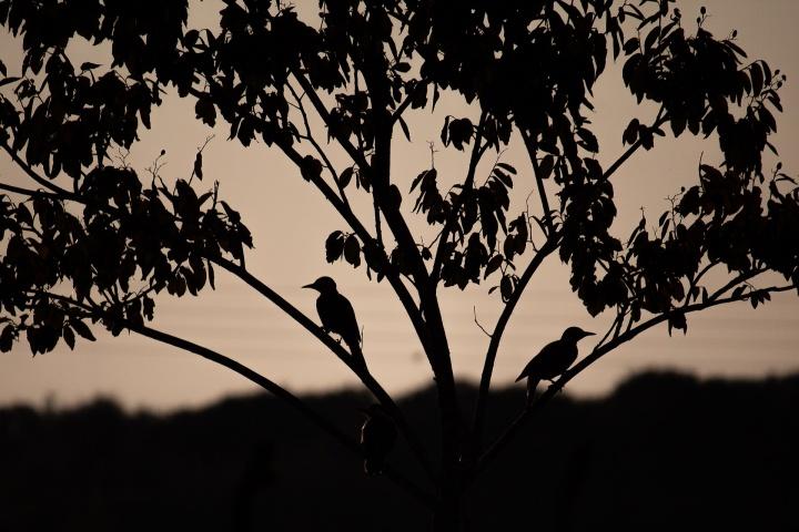 birds-4395443_1920