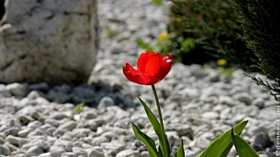 Talajtakaró: mulcs vagy kavics legyen a kertben?