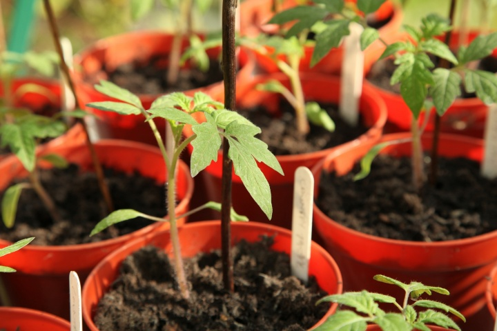 seedling-5009288_1920