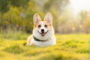 Kutyád van? Így marad szép a gyep!