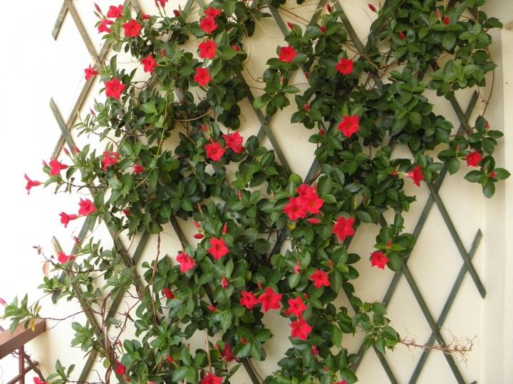 flower-876793_1920