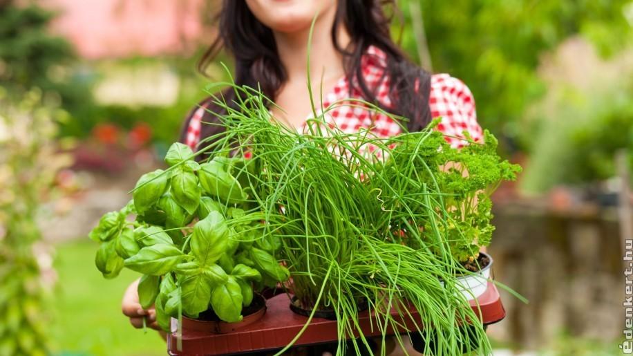 Egy fűszerkert titkai: így legyen mindig friss fűszer a kertedben