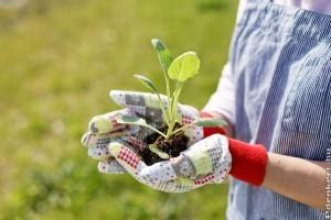 Oxigénnel jelentősen növelhetjük kerti növényeink szépségét, terméshozamát