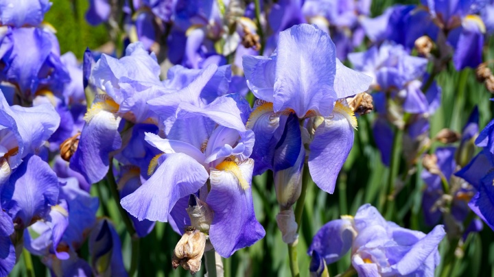 flowers-4426349_1920