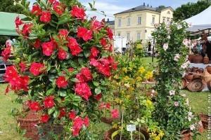 Virágözön a fehérvárcsurgói Károlyi-kastélyban