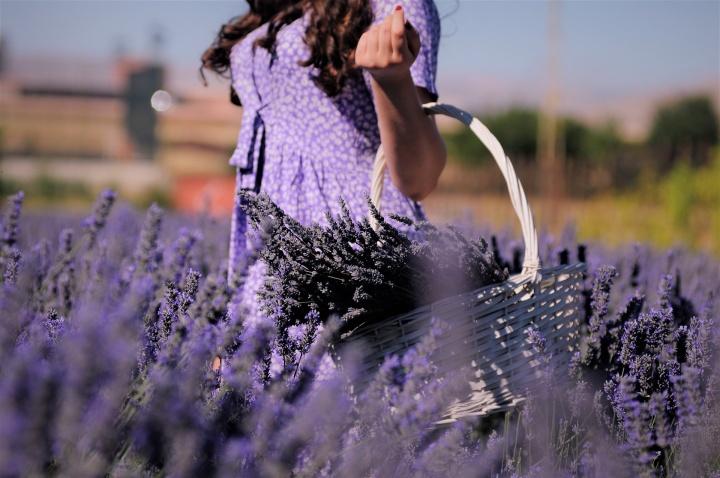 lavender-5854761_1920