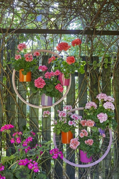 2021_geraniums_3000_colourful_get_together_garden_07