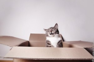 A vicces macskás videók elűzik a stresszfelhőket