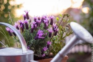 Megyeri Szabolcs tippjei - a kert ápolása forróságban