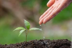 Öntözőrendszer: a minőségen nem szabad spórolni