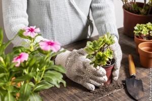 Lehet-e nyáron ültetni?Nyári balkonkertészkedési tippek Megyeri Szabolcstól