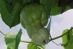 Vicces zöldségek és gyümölcsök a kertből