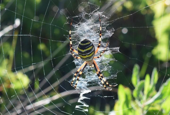 spider-1725977_1920